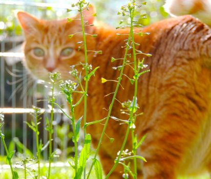 Garden cat I by CloudSymphony