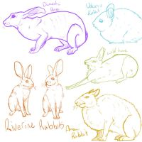 Bunny Rabbit Hare by EpicRave