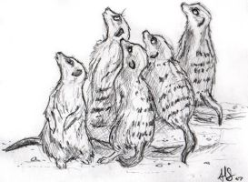 meerkats for jess by therealarien