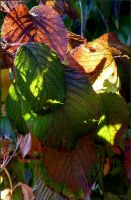 Autumn Leaves 3 by Lupsiberg