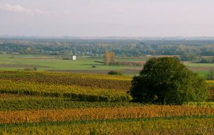 colorful vineyards 2 by archaeopteryx-stocks