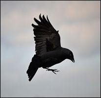 Landing gear ready by FrankAndCarySTOCK