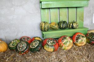 awesome pumpkins 14 by ingeline-art