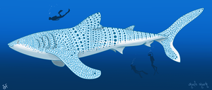 Whale Shark by shayfifearts