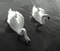 The diagonal swans by Cloudwhisperer67