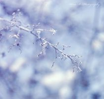 Cold by alina0