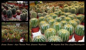 Cactus Section by hellangel86