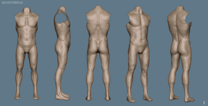 Male Human Anatomy Study by MrNinjutsu