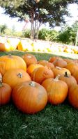Day at the Pumpkin Patch 2688 by pricegotphoto