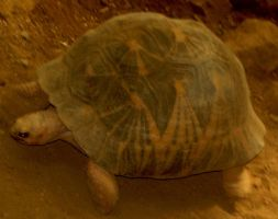 Peaceful Turtle by Willys-Sweetheart