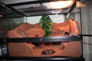 Home made Gecko Desert Habitat by cathy001