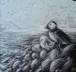 Puffins - Scratchboard by HarmoniousReprise