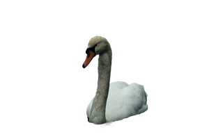 cisne png by eross-666