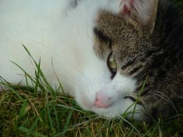 My Cat 4 by Padfoot-Loves-Kitten