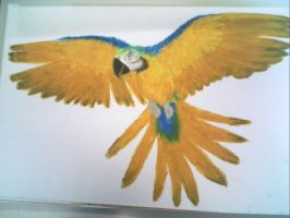 Parrot - Oil Pastel made by TwilightDragon0