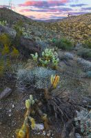 Enjoying A Cactus Sunset by ExplicitStudios