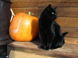 Black Cat 19 :Stock: by WesternStock
