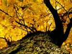 Fall Leaves 2 by m1ssed