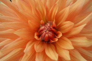 orange by olive-hewick