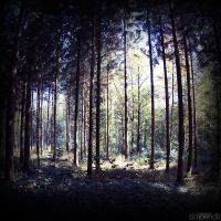 forest. by simoendli