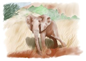 Elephant by RSmales