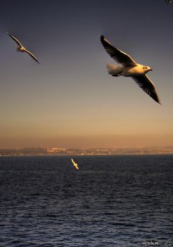 SeaGull by aychlq
