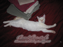 sugar the flying cat by brandrificus-stock