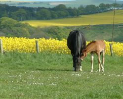 mare and foal stock1 by rewston-stock
