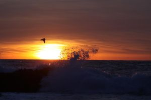 Sea Gull sun set by Exsanguination8