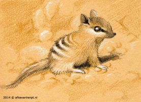 Baby Numbat by afke11