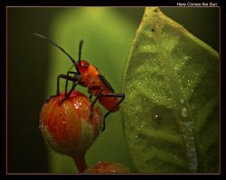 Here Comes the Sun by boron