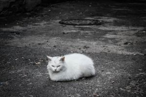 Brest's cat by LifeFun