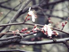 Spring is near by weirdandproudofit