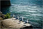 Buddies on the Breakwall by LeahCF