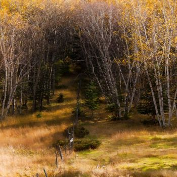 Into the Forest by CharlieA-Photos