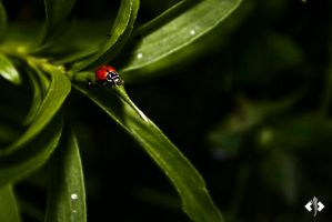 Lady Bug. by Oztill