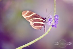 Butterfly Garden by CandiceSmithPhoto