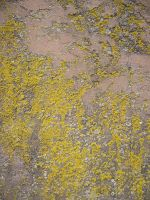 Lichen on Wall by dull-stock