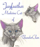 Jayfeather Faces by MudstarMord-Sith