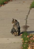 The Neighborhood Cat 1 by stormygate