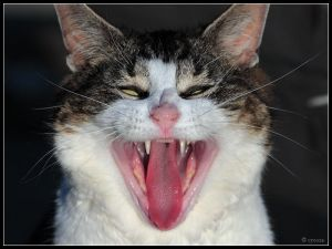 Laughing Cat by cycoze