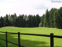 without horses by ALExIA483