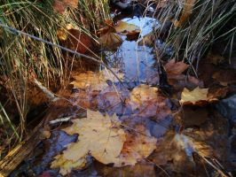 Fall Stream by Gr8-Gatensby