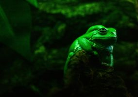 Regal Green Frog by sapphiresphinx