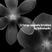 Magnolia brushes by butnotquite