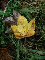 Autumn Leaves Stock VI by maadobs-garden