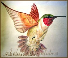 Hummingbird by sketchtricks