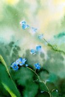 Forget me not by MagdalenaWolff