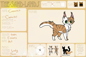 Copperkit of Desertclan | Application by candysprites