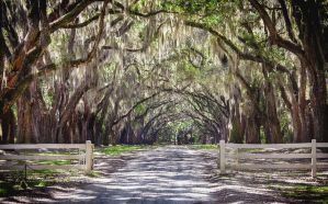 Wormsloe Plantation by rctfan2
